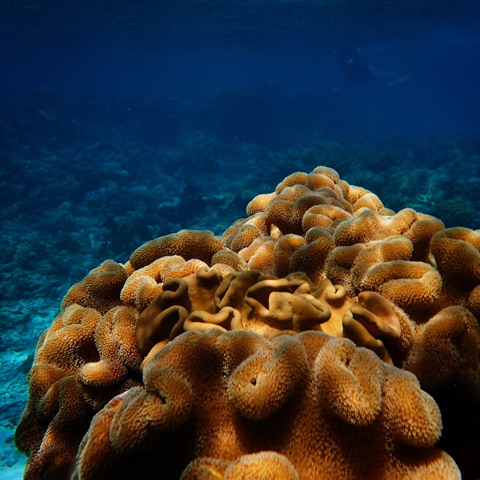 Why do Corals Prefer to Eat Plastic